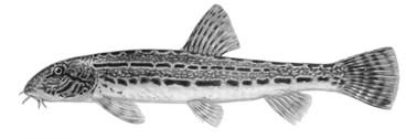 lösungsschlüssel fischerprüfung nrw